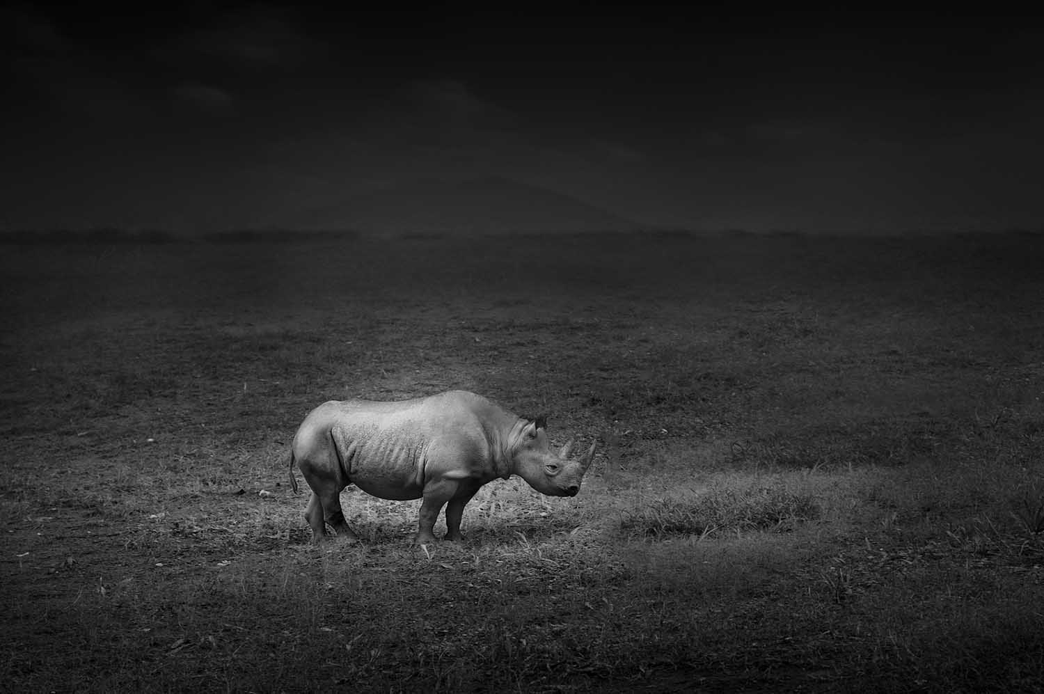 Dennis ramos usa commended open nature wildlife 2014 sony world photography awards