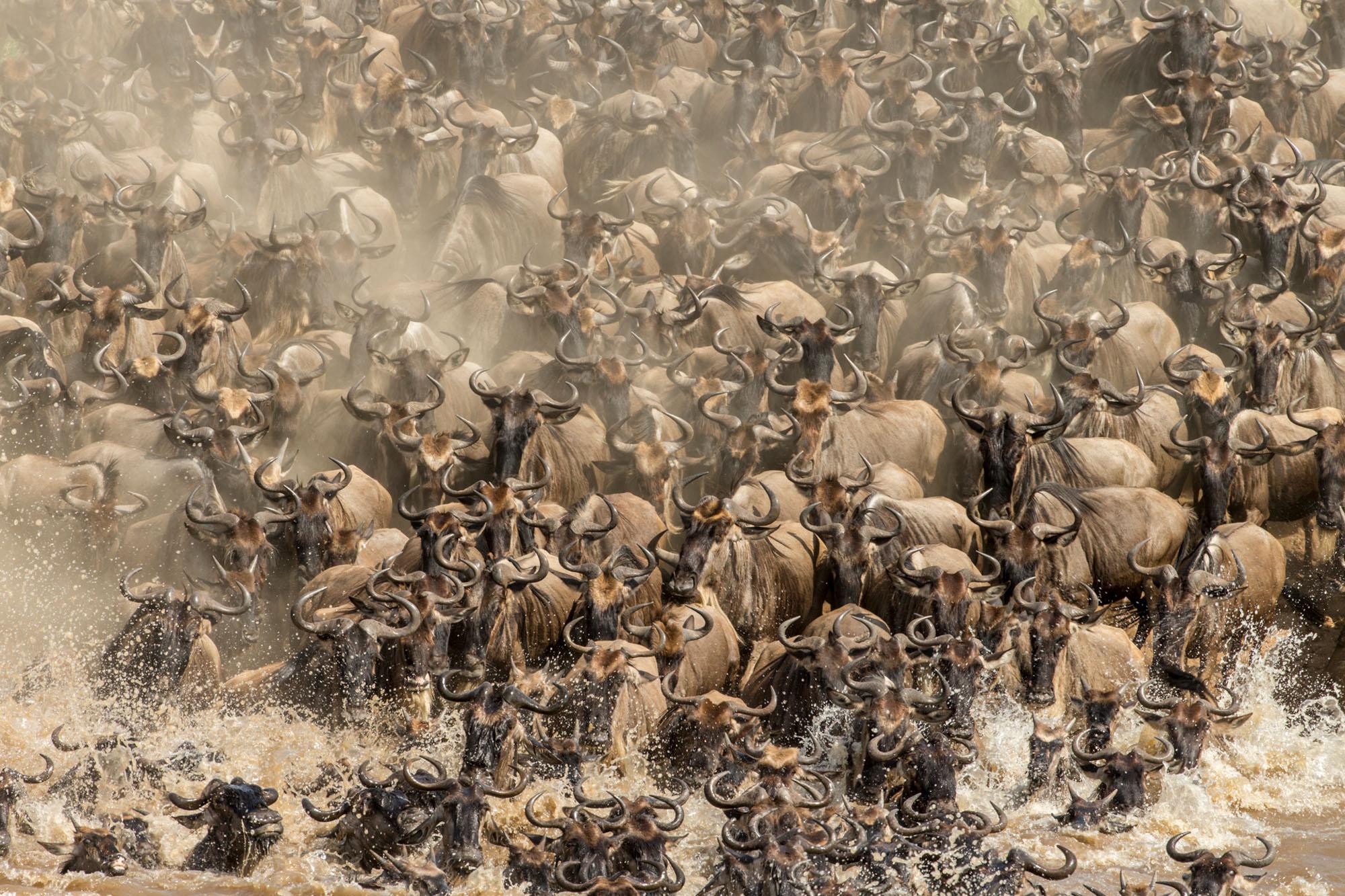 Wildlife World Photography Organisation - 12 amazing photos from the 2016 sony photography awards
