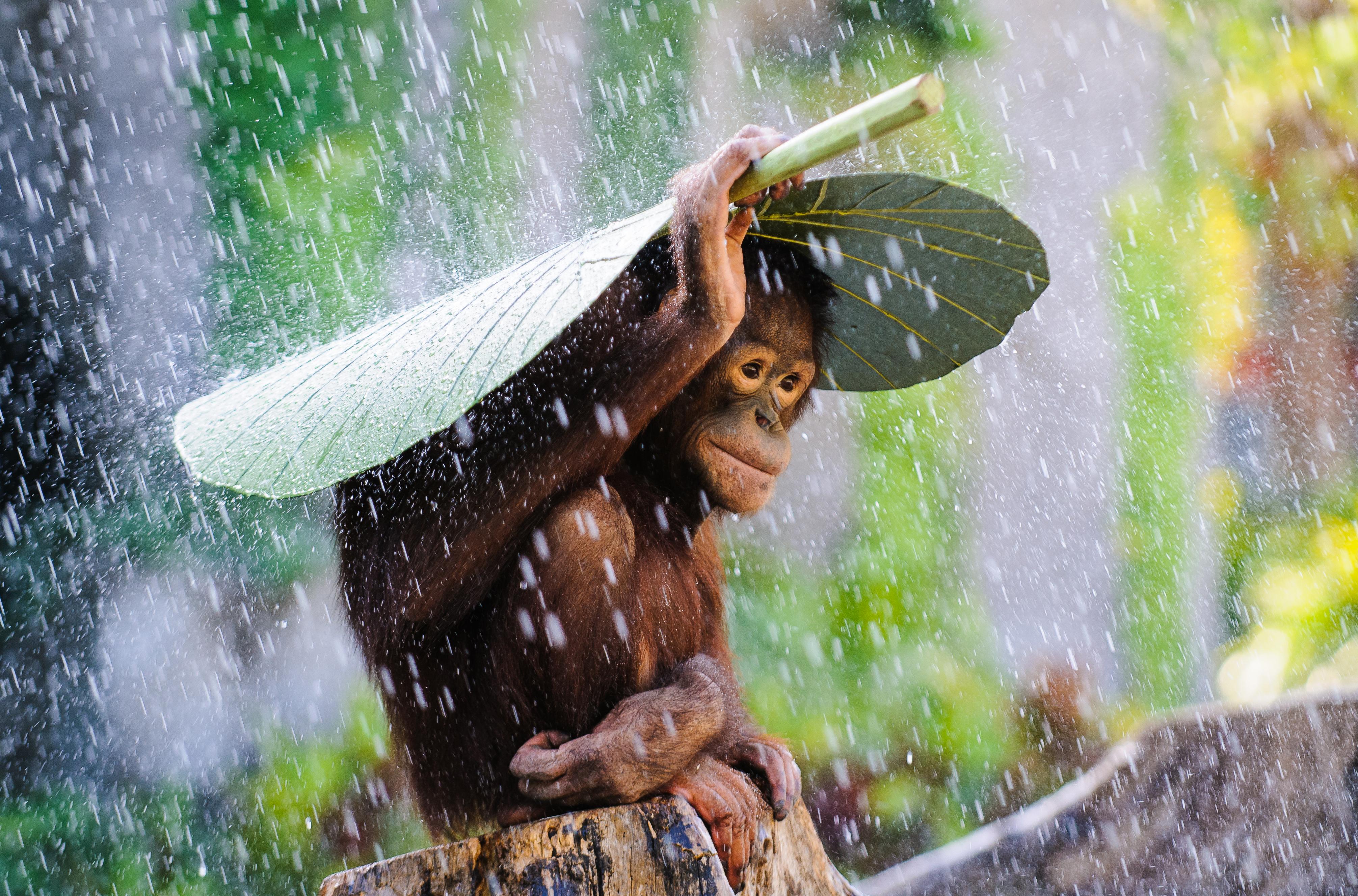Andrew Suryono, Winner, Indonesia, National Award, 2015 Sony World Photography Awards.jpg