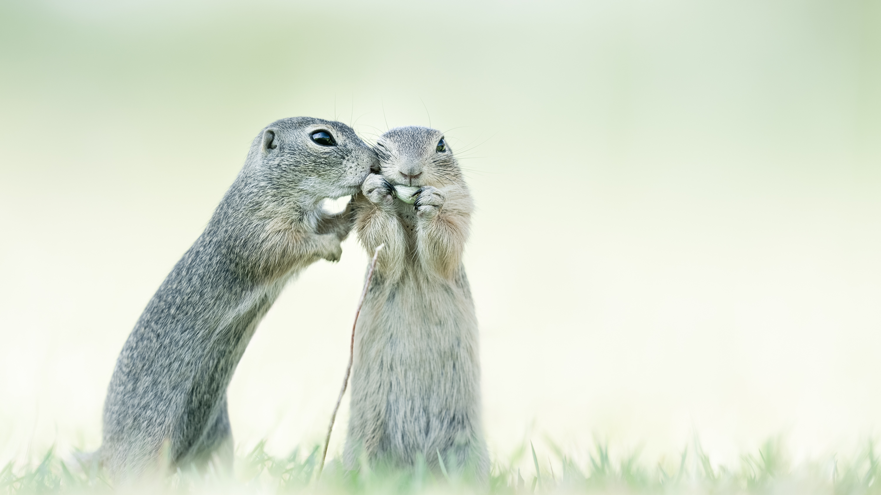 © Alex Pansier, Netherlands, entry, Open competition, Natural World & Wildlife, 2021 Sony World Photography Awards