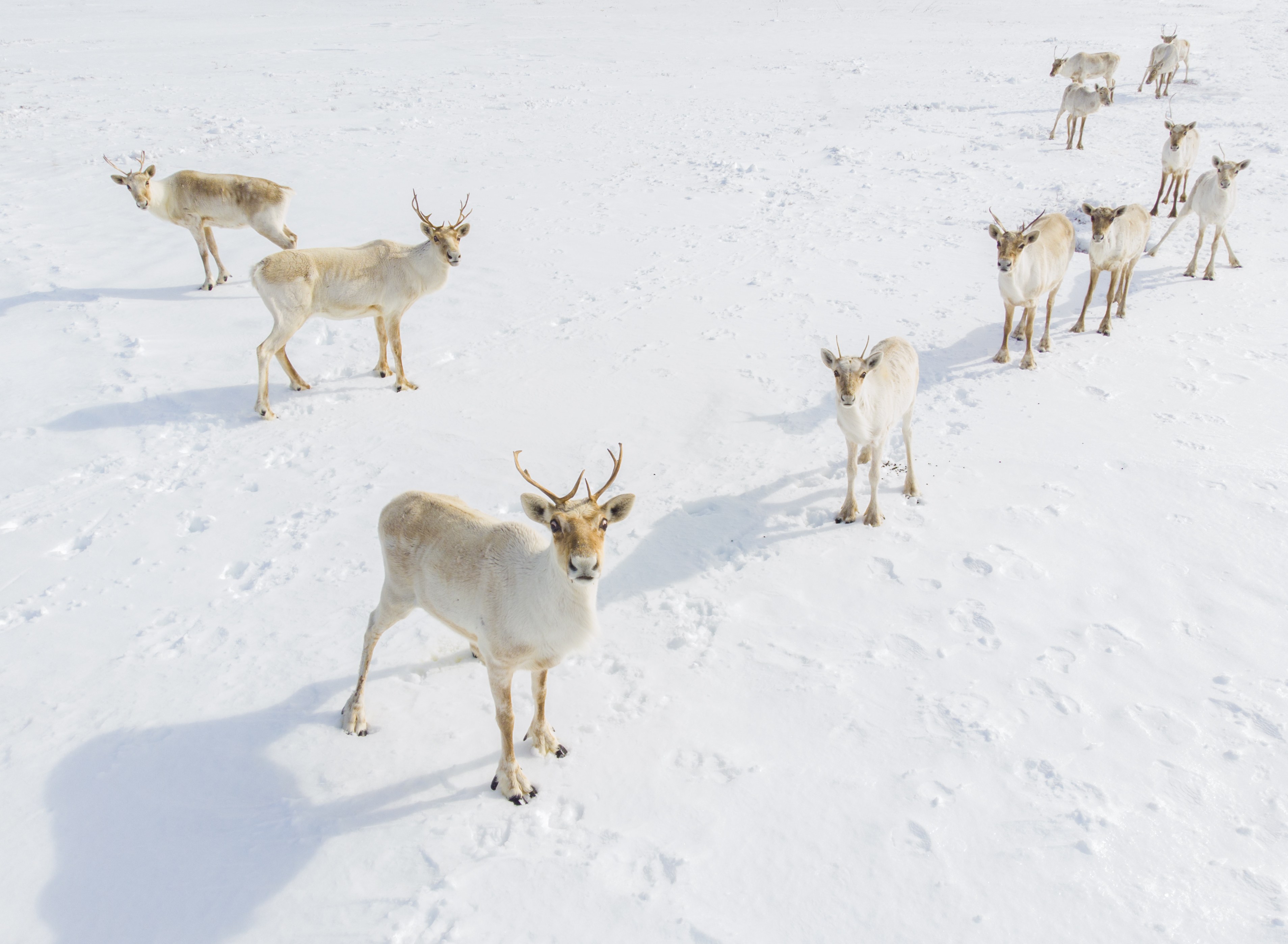 © Bailey Parsons, Canada, entry, Open competition, Natural World & Wildlife, 2021 Sony World Photography Awards