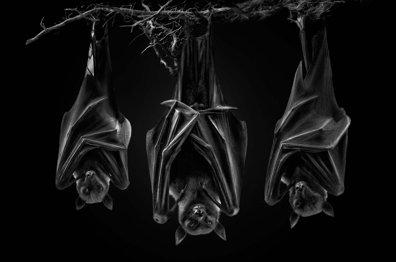 7 revealing animal portraits from bats to bongos world