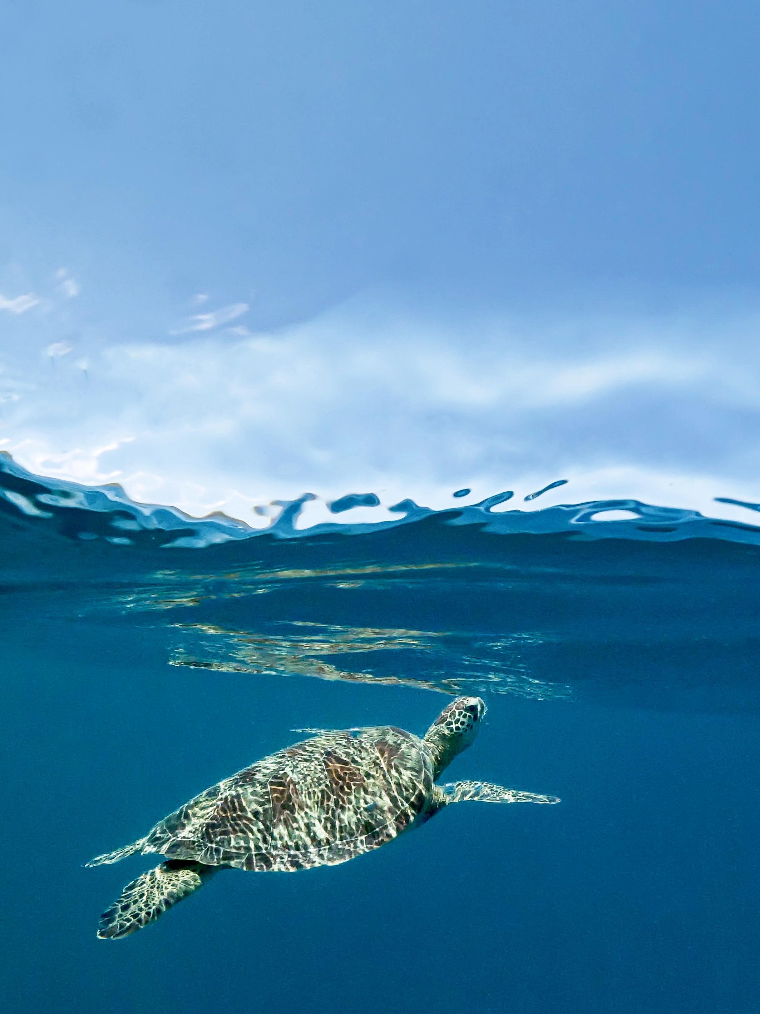 © Serge MELESAN, France, entry, Open competition, Natural World & Wildlife, 2021 Sony World Photography Awards