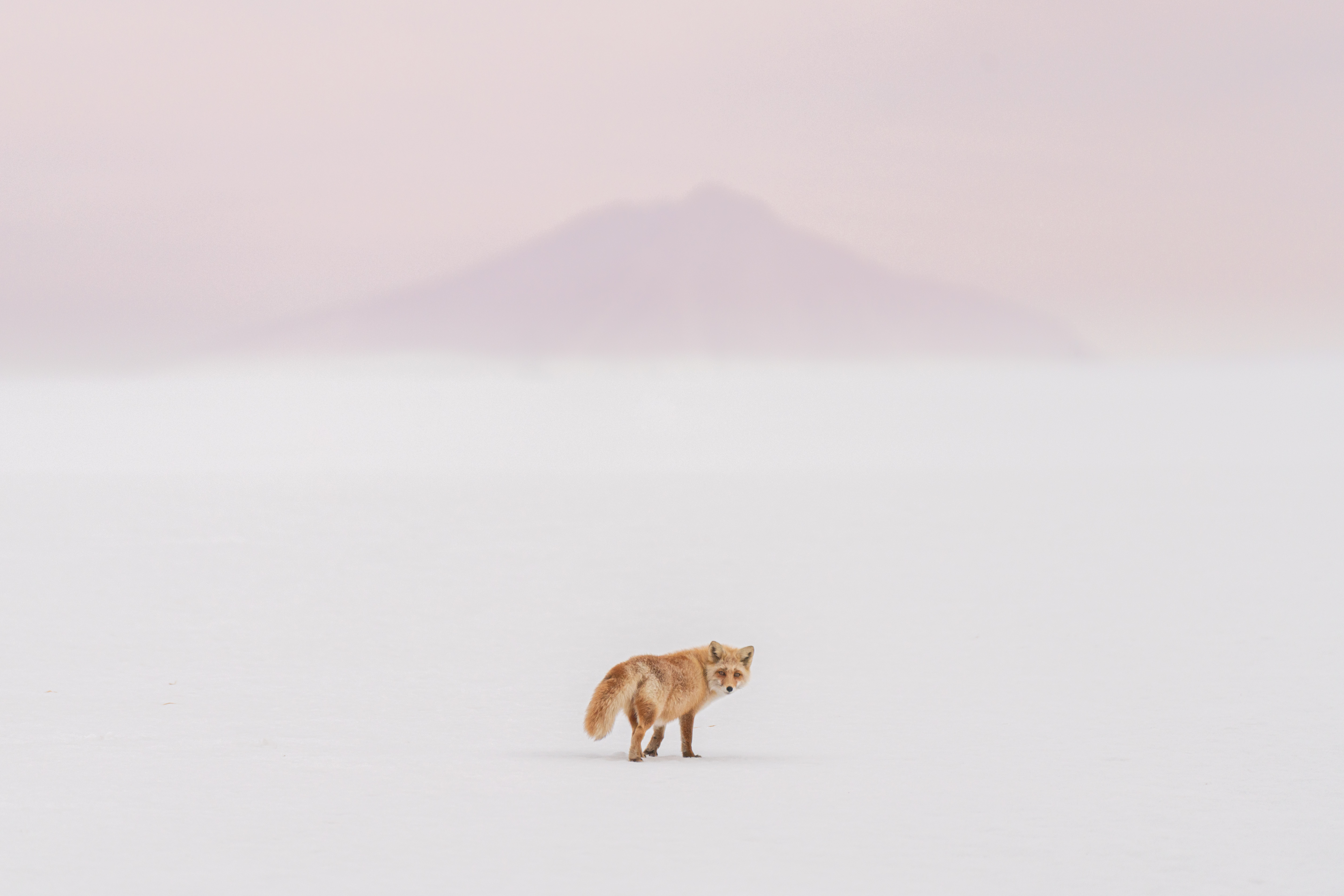 © Yuta Doto, Japan, entry, Open competition, Natural World & Wildlife, 2021 Sony World Photography Awards