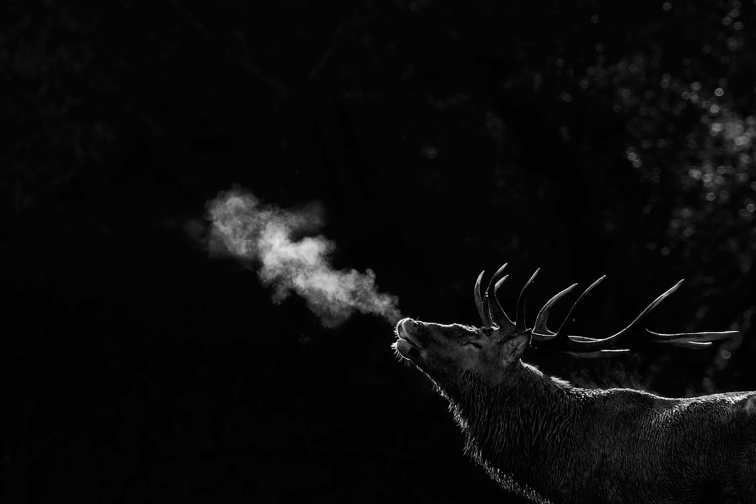 December Th Th Entries Of The Week Sony World - 12 amazing photos from the 2016 sony photography awards