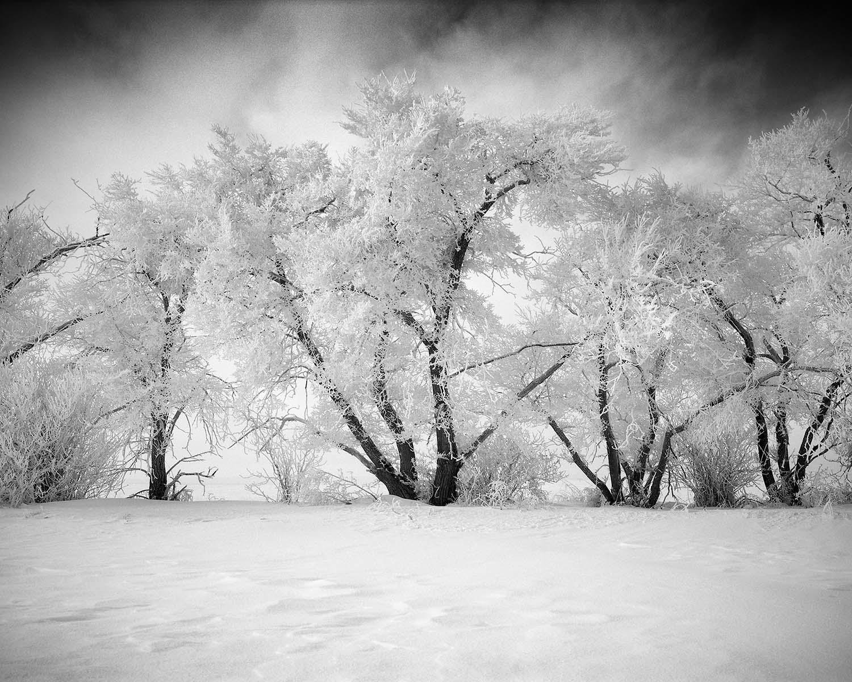 Ice covered trees beiseker olivier du tré
