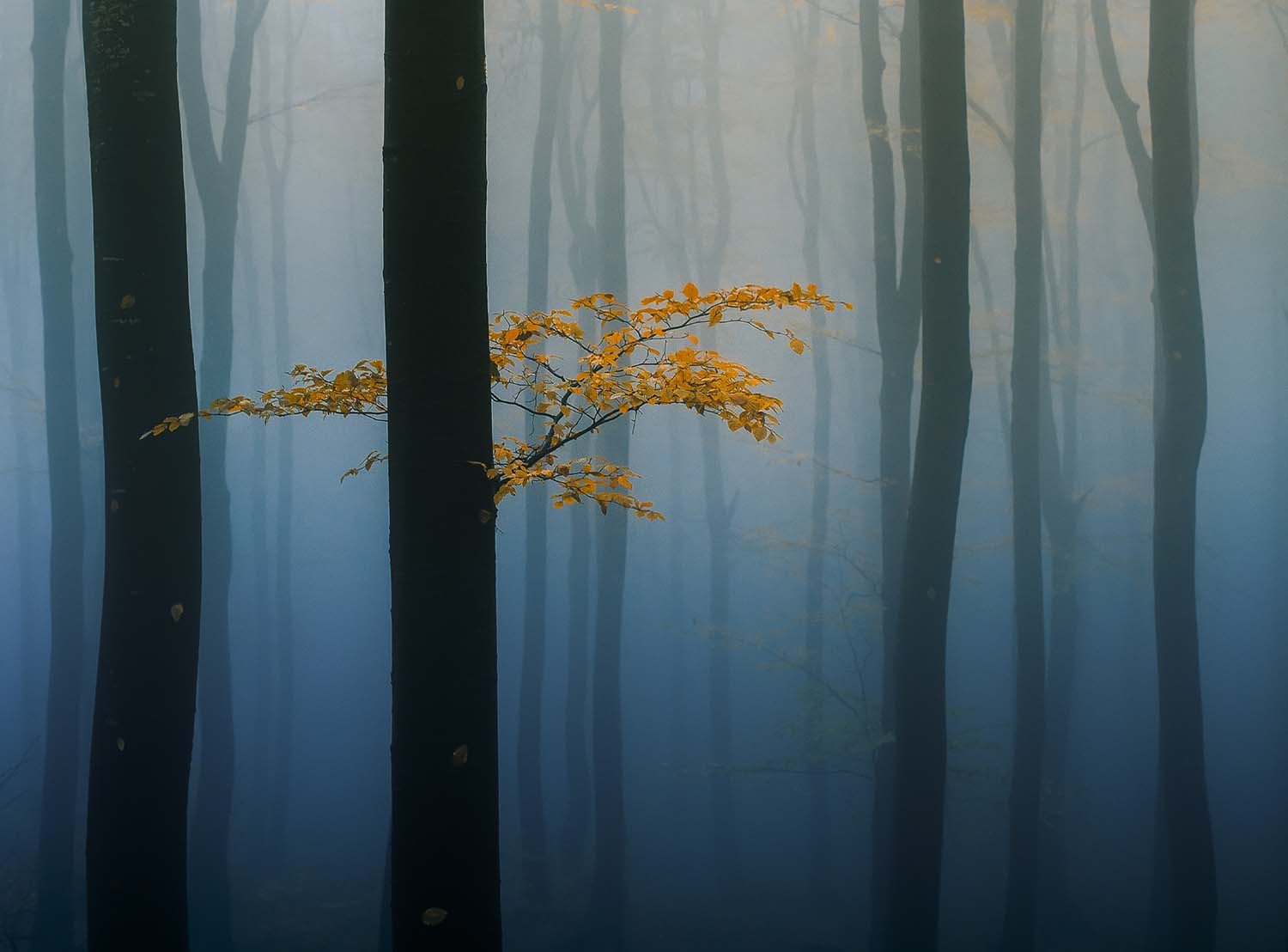 Magical photos show the enchantment of forests | World Photography Organisation