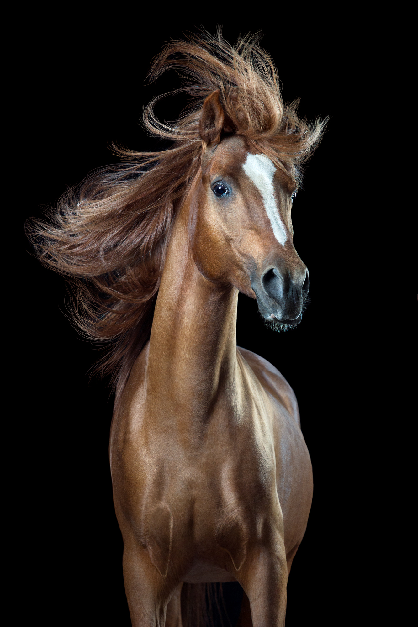 """Horsestyle"" by Wiebke Haas 