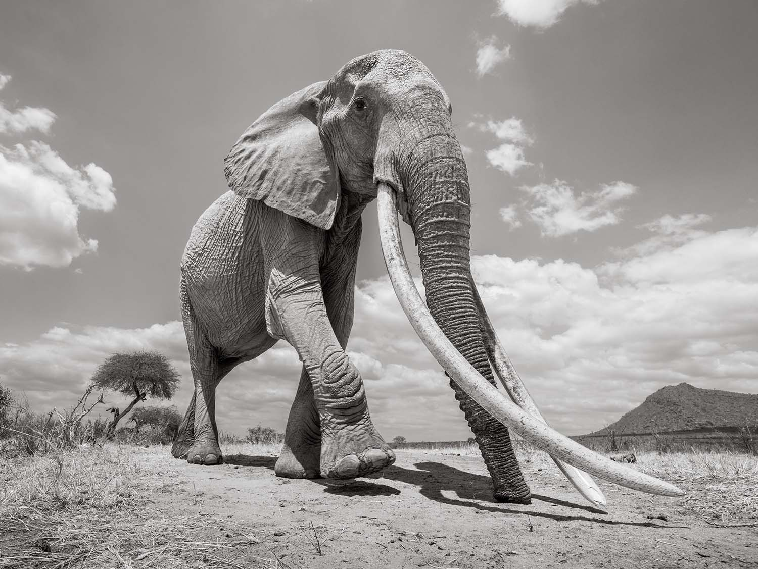 Will Burrard-Lucas, Land of Giants | World Photography ...