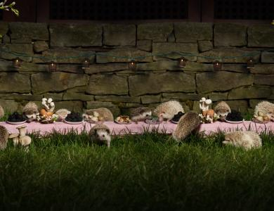The Hedgehog Feast - © Claire Rosen