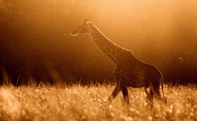 © James Rogerson, UK, Entry, Wildlife
