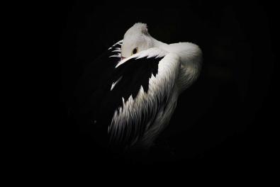 © Pantjoro Prakosa, Entry, Wildlife
