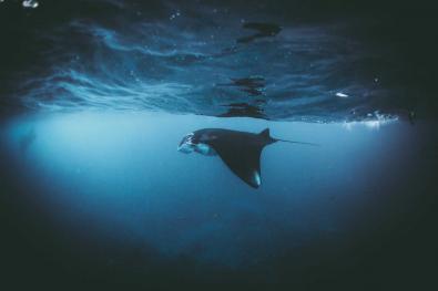 © Daniel Hunter, Entry, Wildlife
