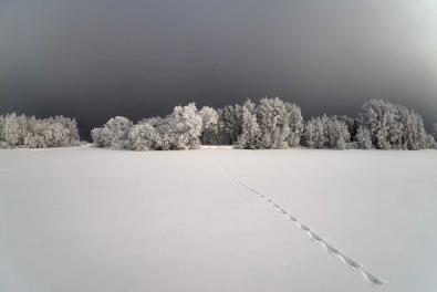 © Andrey Tkachenko, Russia, Entry, Nature